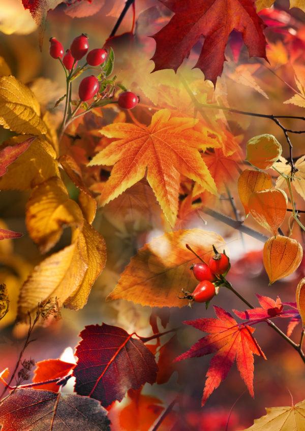 Geschenkverpackung Herbstlaub